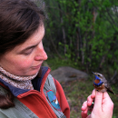 Tereza Petrusková with a bluethroat